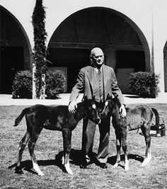 W.K. Kellogg standing by two of his famous Arabian horses