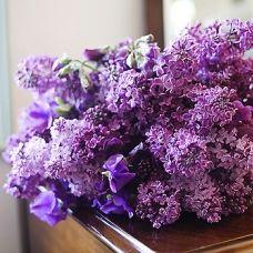 Lavender (lilac) beauty.