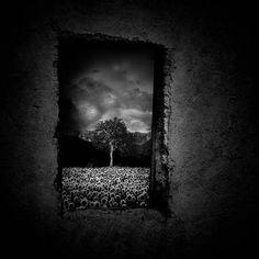At the window by Luigi Esposito