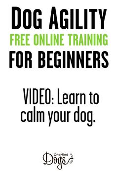 Free dog agility basic online training. Free video class: teach your dog to calm down. Many dogs get so excited about agility that instead of motivating them, we will need to teach them to calm down.
