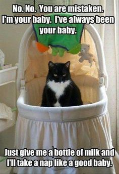 And I've placed that hairless thing that was in here in my litter box...