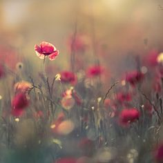 The top rated photos on right now, as voted on by the community of photographers and enthusiasts. Many of the best images on are available for royalty-free licensing. Billy Kid, Wild Flowers, Dandelion, Popular, Nature, Plants, Wallpapers, Color, Image