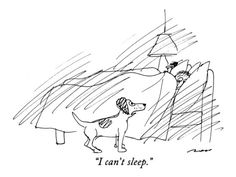 """I can't sleep."" - New Yorker Cartoon    by Al Ross"