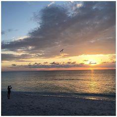 My boss captured this amazing photo of me taking a photo  #nofilter #photoofaphoto #sunset #greatbarrierreef #happy #travel #ocean #beach #amazing #beautiful #wanderlust @ladyelliotislandecoresort by dalia_williams http://ift.tt/1UokkV2