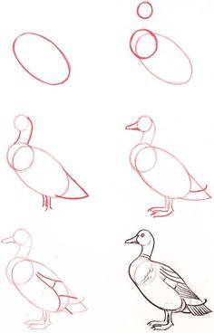 Pato desenho