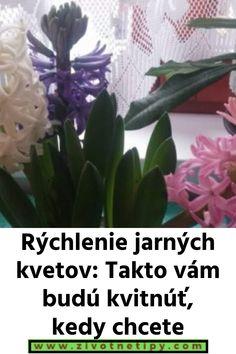 Rýchlenie jarných kvetov: Takto vám budú kvitnúť, kedy chcete Ale, Plants, Ale Beer, Flora, Plant, Ales, Planting, Beer