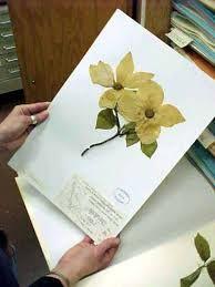 Billedresultat for herbarium