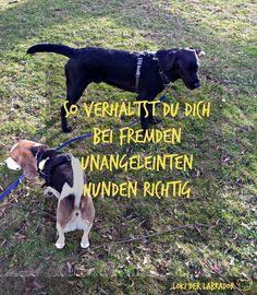 Titelbild fremde unangeleinte Hunde