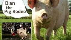 "Petition · ""Okuchi no Umi Carnival"" Mikame Event Executive Committee: Please ban the ""Pig Rodeo""! · Change.org"