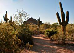 Phoenix Desert Botanical Gardens