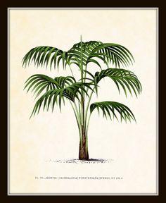 Antique French Palm Tree Plate 7 1878 Botanical Art Print 8 x 10 Art Print Wall Decor Original Collage Beach Nautical Coastal Living Decor. $10.00, via Etsy.