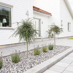 One of my all-time favorite hobbies is having a garden each year. Front Garden Landscape, Front Yard Landscaping, Landscape Design, Garden Design, Cottage Extension, Backyard Sheds, Back Gardens, Garden Planning, Garden Inspiration