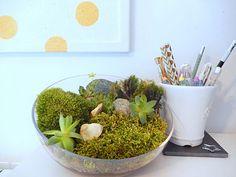 Tuto gratuit en français fabriquer un mini jardin d'interieur DIY
