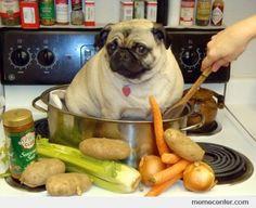 Pug soup
