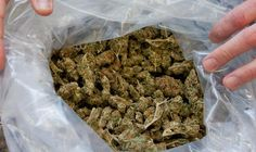"""ISTANBUL — Turkish police seized five tons of marijuana with a street value of at least $2 million near the border with Iran on Tuesday and officials said they were investigating the involvement of Kurdish militants. Turkish security sources say drug trafficking is a major source of income for the Kurdistan Workers' Party (PKK), which took up arms 28 years ago with the aim of carving out a Kurdish state in the southeastern border region with Iran and Iraq. """"Our security forces are…"""