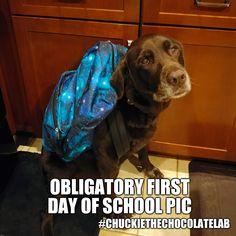 Okulun İlk Günü Konseptiyle Hazırlanmış 26 Komik Köpek Fotoğrafı First Day Of School, Dogs, Animals, Animais, Animales, First Day School, Animaux, Pet Dogs, Back To School