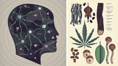 http://payload350.cargocollective.com/1/5/176485/9301787/Be-Papers-Cover-Head-Dice-Mind-Altering-Drugs-Cannabis-Mushrooms-Coffee-Retro-Vintage-School-Chart-Owen-Davey-Illustration_1600_c.png