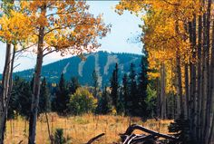 Apache Sunrise Mountain, operated by the White Mountain Apache Tribe - Rob skied here many times in the early 80s.
