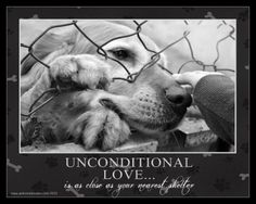 Unconditional Love Is As Close As Your Nearest Shelter.