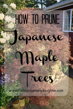 Keep The Delicate Shape Of Your Japanese Maple With These Handy Pruning Tips How To Prune Japanese Maple Trees Pruning Weeping Trees Gardening Pruning Trim Trees Spring Pruning Japenese Maple, Pruning Japanese Maples, Bloodgood Japanese Maple, Weeping Trees, Growing Bamboo, Japanese Garden Design, Japanese Gardens, Japanese Garden Plants, Japanese Garden Landscape