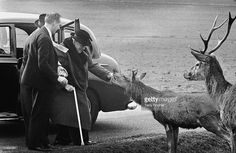 British wartime prime minister Winston Churchill - feeds the deer in Richmond Park, accompanied by his private secretary Anthony Montague Brown and personal detective Edmund Murray, March (Photo by Terry Fincher/Express/Hulton Archive/Getty Images)