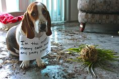 Horticulturalist Hound dog. This was probably the cats' fault