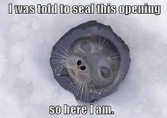 Clever seal