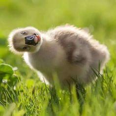 Sweet ducky