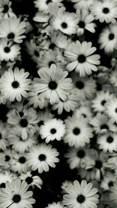 Pastel Background Wallpapers, Wallpaper Iphone Quotes Backgrounds, Iphone Wallpaper Vsco, Wallpaper Iphone Disney, Flower Backgrounds, White Flower Wallpaper, Daisy Wallpaper, More Wallpaper, Trendy Wallpaper