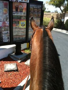 Taking your horse thru the drive thru :) On my bucket list! I need a horse first though ...