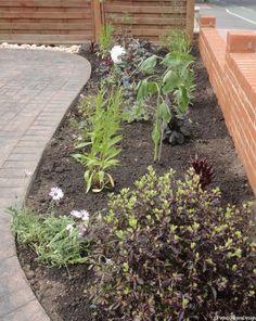 Front Gardens   Garden Design Portfolio