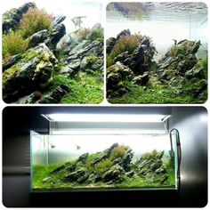 Favourites: tank by Ludo BourdinThis is what I call a natural landscape… so well accomplished!