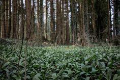 » sharpen your senses « Blogging, Travel Photography, Plants, Life, Traveling, Blog, Flora, Plant