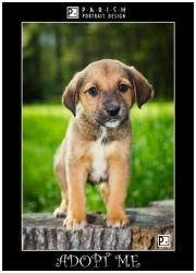 Saint is an adoptable Jack Russell Terrier Dog in Amory, MS. Saint's Mother was a Basset Hound/Shepherd Mix and his dad was a Jack Russell/Beagle Mix, what an interesting combination. He came with a l...
