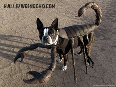 top 10 dog costumes | Top 23 DIY Costumes for Pets Stuff I Stumbled Upon