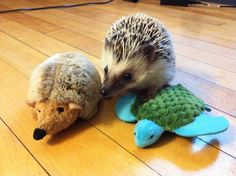 33 Animals with Stuffed Animals of Themselves :) #aww #cute