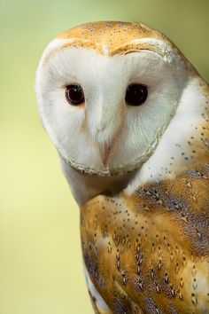 Absolutely love owls, I think barn owls are my favorite 8)