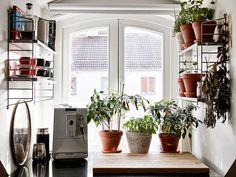 kitchen plants.