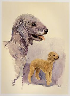 Beautiful BEDLINGTON TERRIER Print Vintage by plaindealing on Etsy