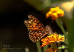Butterfly Kisses  by KathyHerriottMeyers #nature #mothernature #travel #traveling #vacation #visiting #trip #holiday #tourism #tourist #photooftheday #amazing #picoftheday
