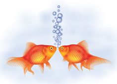 How to Create a Detailed Goldfish Couple with Adobe Illustrator | Vectortuts+