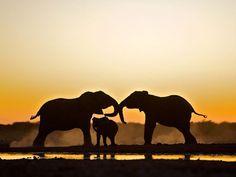 Dos elefantes adultos y su cría en un water hole del Parque Nacional de Etosha en Namibia