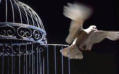 Today I saw bird in a cage, head all thrown back and singing. I was blessed by the melodious sound of the birds song, and very enamored by.