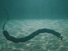 This robot twists and twines under the water like a snake -- which is a good thing, since it's based on the real thing.