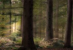 Glowing Forest by justinrimpel. @go4fotos