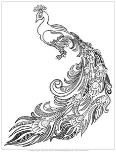 Peacock coloring page at Easy Peasy and Fun