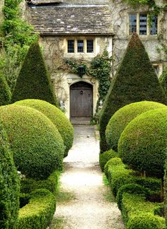 The word topiary is not common among many people. It is simply a way to give proper shape to the hedges and trim them in a perfect manner. This art of giving proper shape to the hedges is quite popular in all over the world. Boxwood Garden, Topiary Garden, Topiary Trees, Formal Gardens, Outdoor Gardens, Thuja, Formal Garden Design, English Country Gardens, Garden Cottage