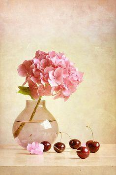 ,,,,,HYDRANGEA   Y  CHERI,,,,,,cheri  ,cheri   de   my   Garden  ??????**+