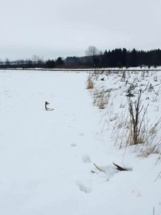 Deer Hunting Tips, Shed Antlers, Elk, Taxidermy, Sheds, Outdoor, Winter, Baby, Moose