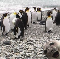 The 35 Greatest Animal Photobombers Of All Time. So cute! Look at the right side!